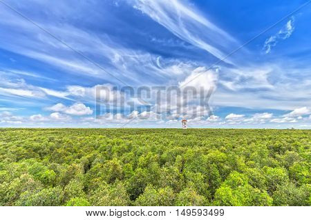 Mangrove forests observatories with a beautiful morning sky, rising from the house like a giant mushroom forest reaching up to the sky to welcome the beautiful new day