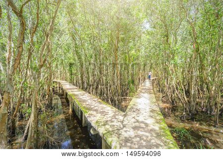 Small road in a high with two turns through the mangrove forests welcome the first sunny beautiful day