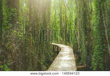 Small road on high through the melaleuca forests