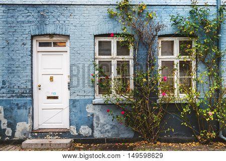 City center autumn street in Copenhagen Denmark. Blue house wall white door and windows near red blossom flowers and fallen leaves.