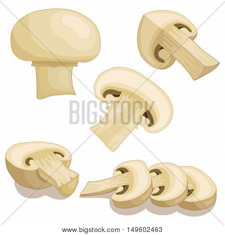 Fresh champignon mushrooms. Vector illustration. Pieces sliced and half of champignon isolated on white background.