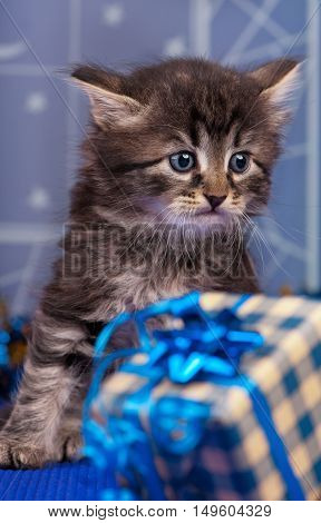 Cute fluffy kitten with Christmas gifts and over light-blue background