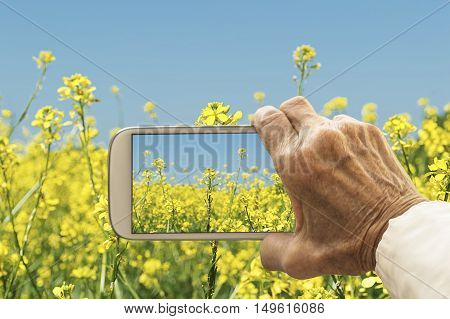 Old hand taking photography of oilseed rapeseed flowers field. Agricultural concept.