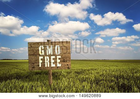 GMO FREE sign on field of rye. Selective focus.