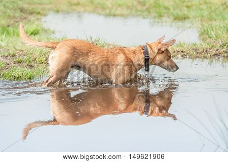 small dog and its reflection in a pool of water