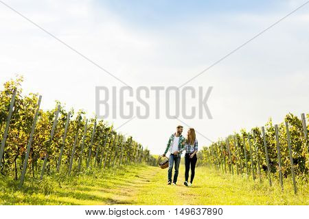 Couple of winegrowers walking in the vineyard