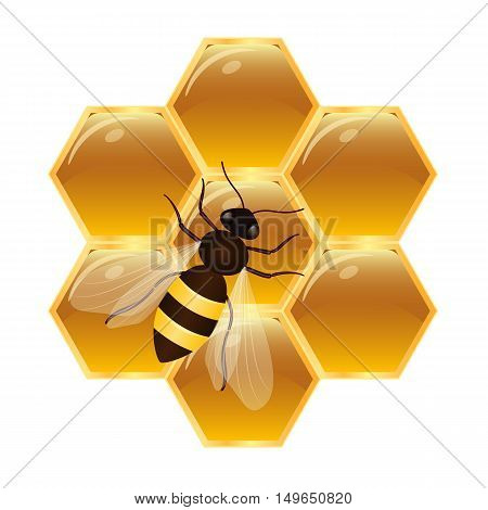 Honeycombs with honey and bee. Isolated vector illustration on white background.