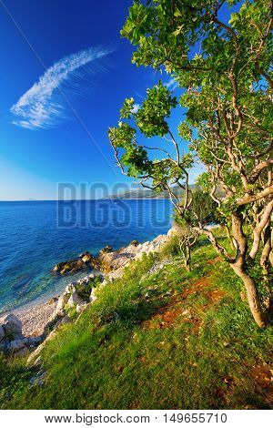 Amazing Rocky Beach With Cristalic Clean Sea Water With Pine Trees N The Coast Of Adriatic Sea, Istr
