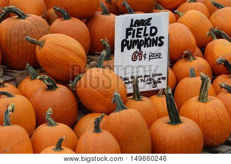 Pumpkins for sale at a farm stand in massachusetts in Fall.