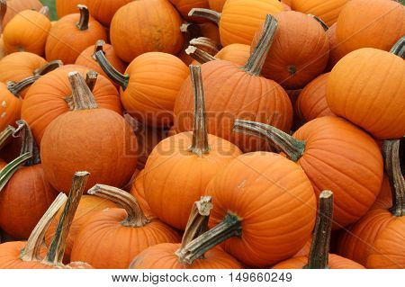 Pumpkins piled up for sale at a farm stand in Massachusetts in Fall.