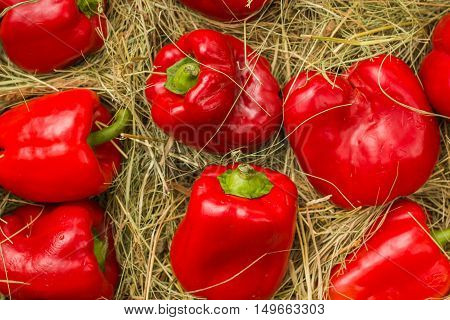red background texture, group of red paprica bell peppers in market