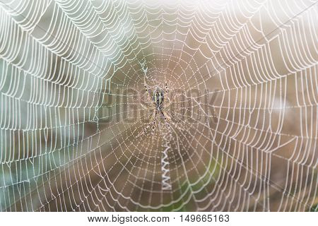 spider web in the early morning  grass, hazy, landscape, macro