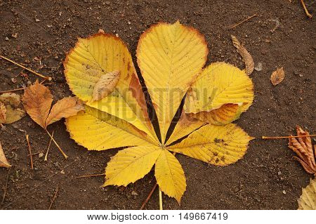 Autumn etude with leaves of a chestnut tree
