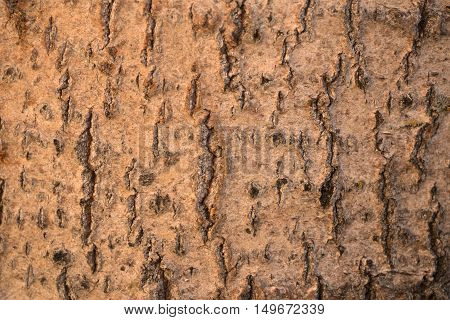tree bark crust, rind, incrustation, tree, wood, timber