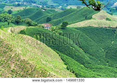 Lush green coffee covered hills near Manizales Colombia
