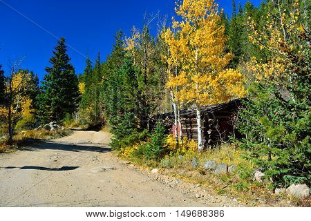Log Shotgun Cabin Shack In Fall with Changing Leaves and a Dirt Road