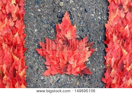 Canadian flag made with real autumn maple tree leaves.