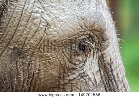 Close up of an elephant in a zoo
