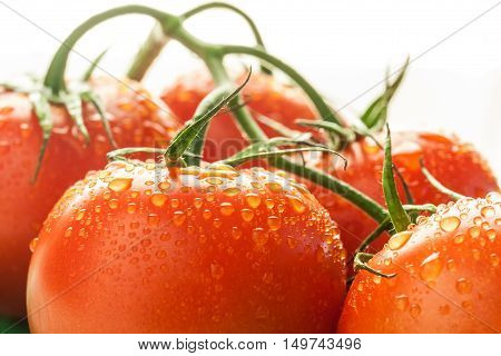 Close up of Red Tomatoes with waterdrops
