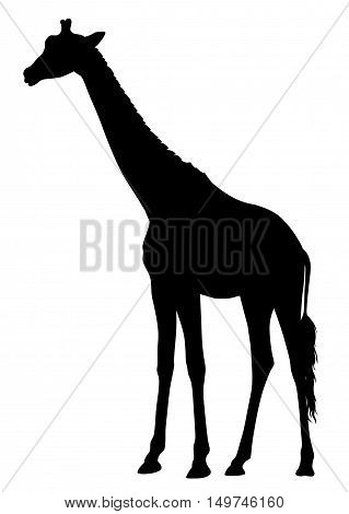 Abstract vector illustration of an girafe silhouette. The tail of the giraffe is a separate element and can be moved to different locations