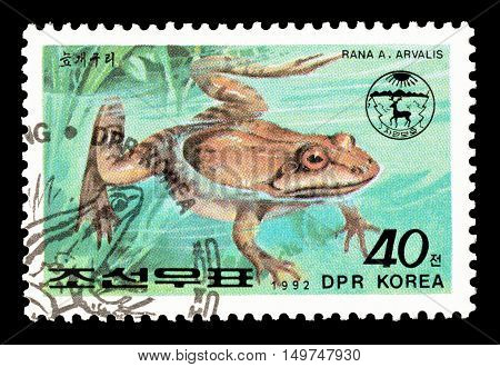 NORTH KOREA - CIRCA 1992 : Cancelled postage stamp printed by North Korea, that shows Moor frog.