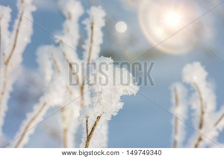 Early winter morning on the eve of Christmas dry grass covered with frost and snow. Winter background.