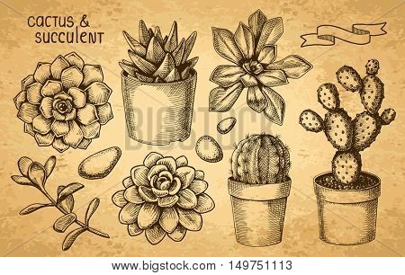Succulents And Cacti Sketch Set