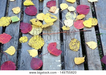 Still-life with many colorful fallen leaves fallen leaves on old vintage wooden table with outdoor front view close-up