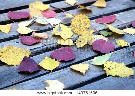 Still-life with many colorful fallen leaves fallen leaves on old vintage wooden table outdoor diagonal front view close-up