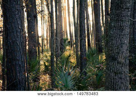 Pinckney Island National Wildlife Refuge in Carolina