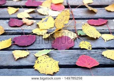 Still-life with many colorful fallen leaves fallen leaves on old vintage wooden table outdoor front view close-up