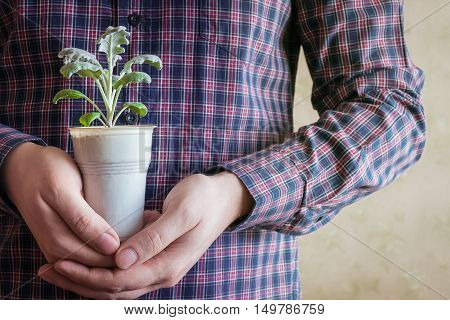 Human holding in hands a small flower plant. Care and protection theme