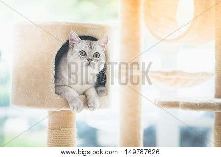 Cute cat lying on cat tower in room