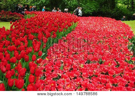 Keukenhof Gardens, The Netherlands - May 3, 2014. Tulip show at Keukenhof Gardens near Lisse in The Netherlands, with people in the background.