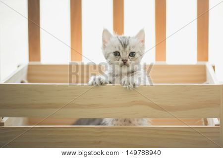 Cute tabby kittens looking in a wood boxvintage filter