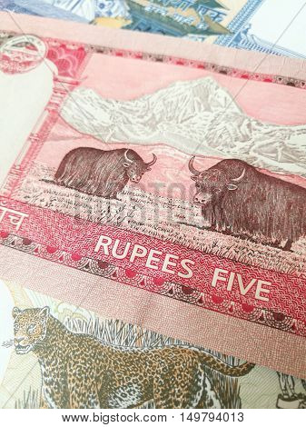 Nepalese rupee, close up of Nepal paper bank note money