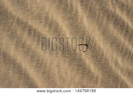 Single Leaf On Desert Sand