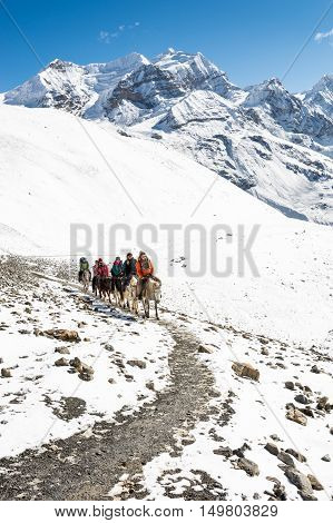 Thorong La, Nepal - October 16: Tourists riding horses to pass high mountain pass at 5416 m, on October 2016 at Annapurna region in Nepla.
