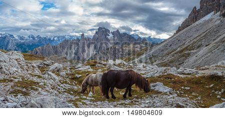 Horses on the mountain pass in the Dolomites, Italy