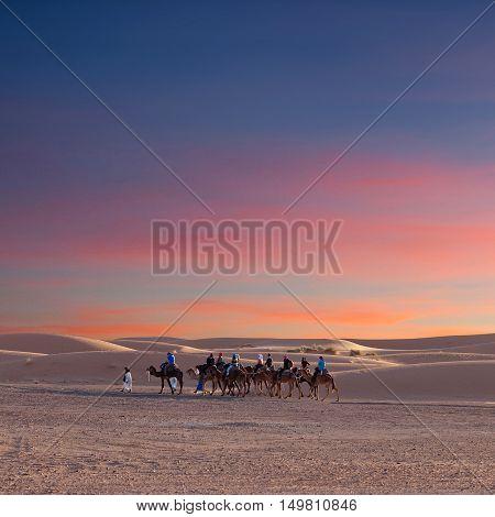 Camel Trekking In Western Sahara, Morocco