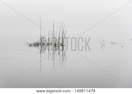 River And Grass In Fog On Gray Background