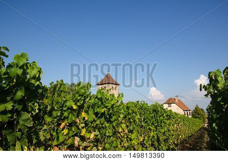 View from a vineyard in the village Dambach-la-Ville by the Alsace wine route in France