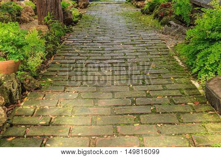 walkway and small fern in a garden