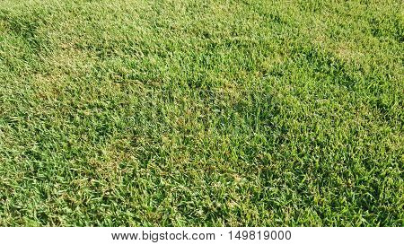 Freshly Cut Grass with Slight Brown Patches
