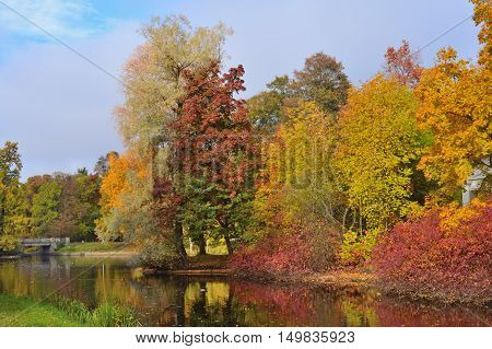 Beautiful colorful autumn trees in the park