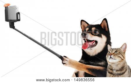 Funny dog and cat taking selfie on white background.
