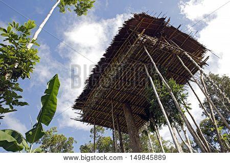 Korowai Treetop House Deep Inside the Forest. Papua Indonesia