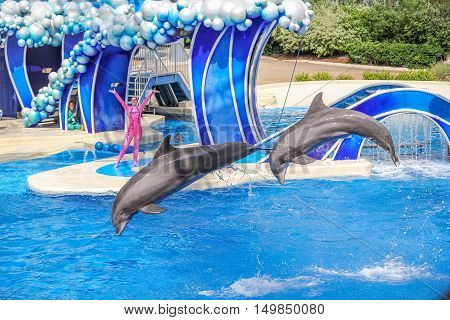 Orlando Florida United States - April 22 2012: two dolphins jumps in Azul Show at Seaworld. Seaworld is an animal theme park oceanarium and to a marine mammal park.