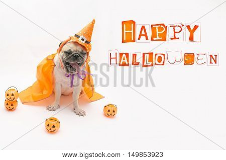 Cute puppy pug dog wearing a Halloween witch hat.