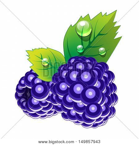 Blackberry fruit. Blackberry and leaves with water drops on white background. Vector illustration of blackberry.